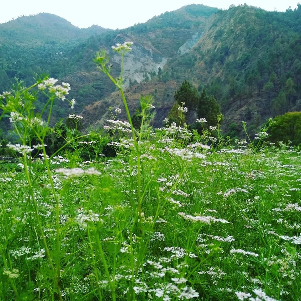 Our Coriander Farm Stay With Us Experience The Adventure And Benefits Of Organic Himalayan Spices At Our F Sustainable Tourism Responsible Tourism Ecotourism