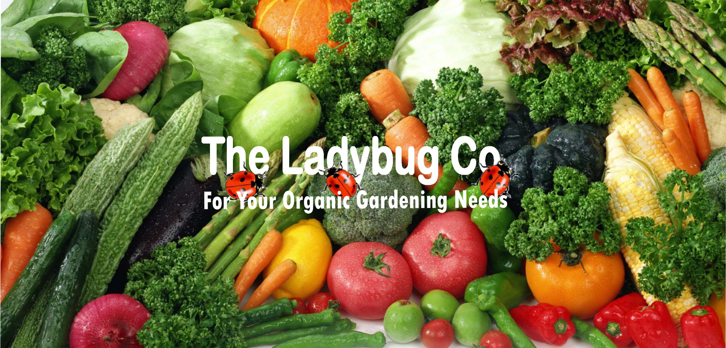 Pin by The Ladybug Company on Multi Media Healthy