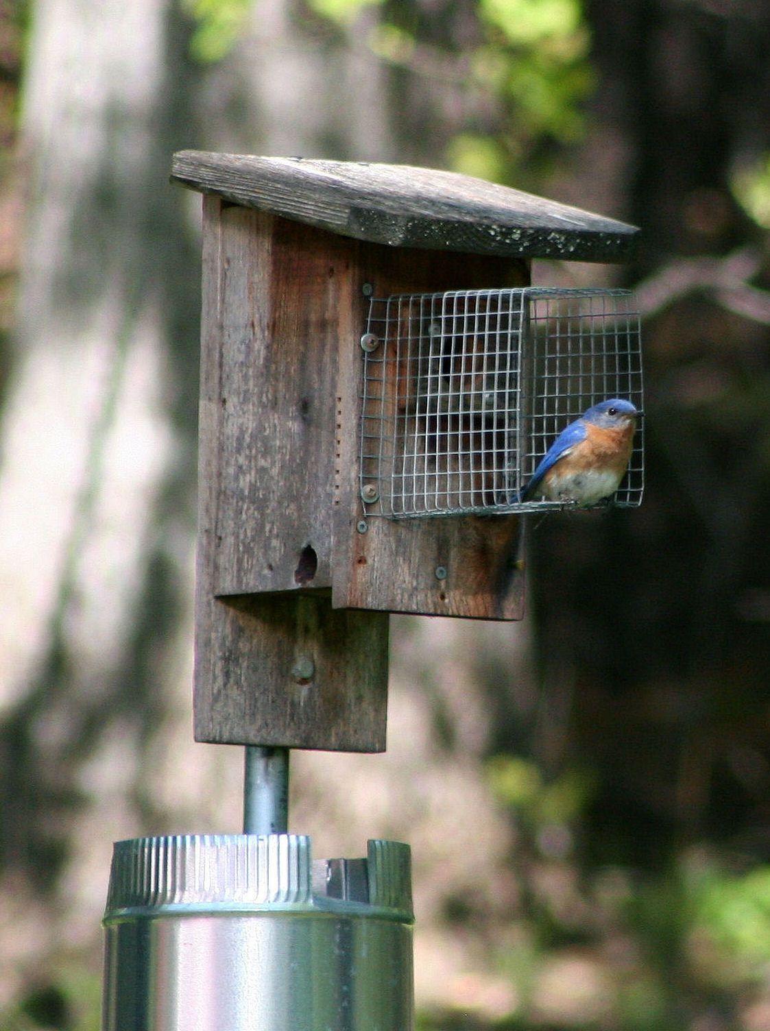 PURPOSE and CONTACT ME Blue bird, Bird houses