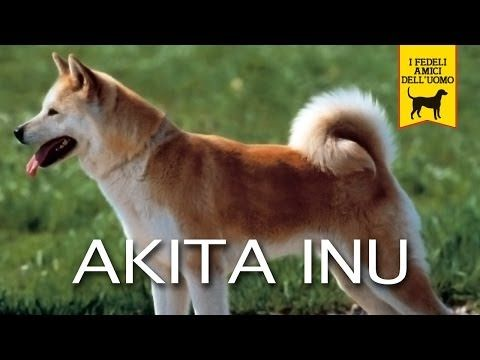 akita inu - trailer documentario