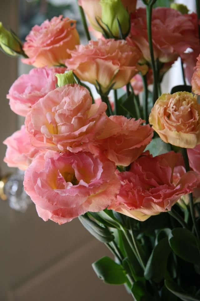Lysianthus or Eustoma Wow, I've never seen this shade before! Lovely!