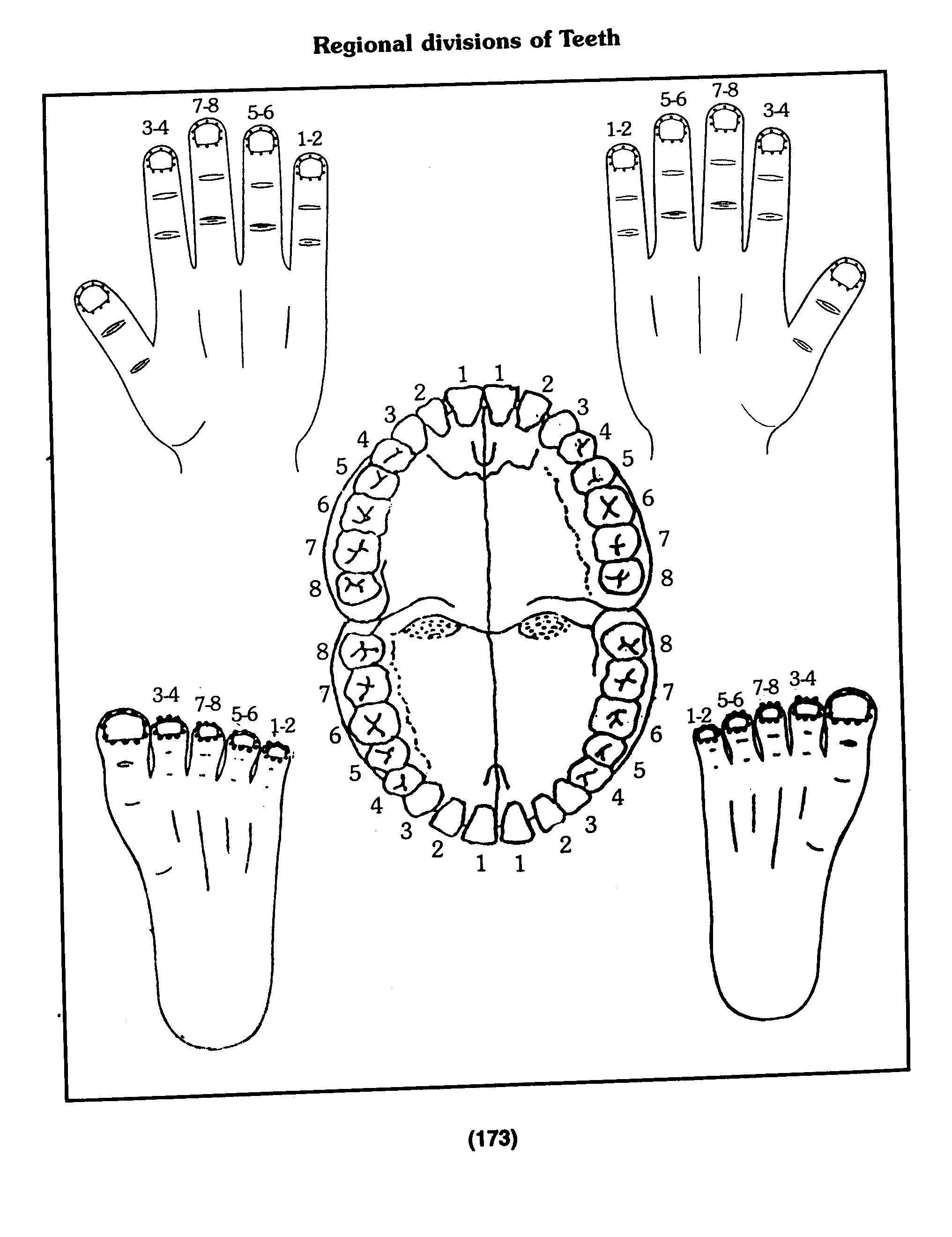 Teeth Points To Be Found On Nails Of Hands And Feet