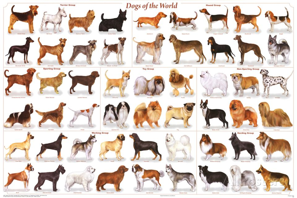 Dogs Of The World Educational Science Chart Poster Posters Dog