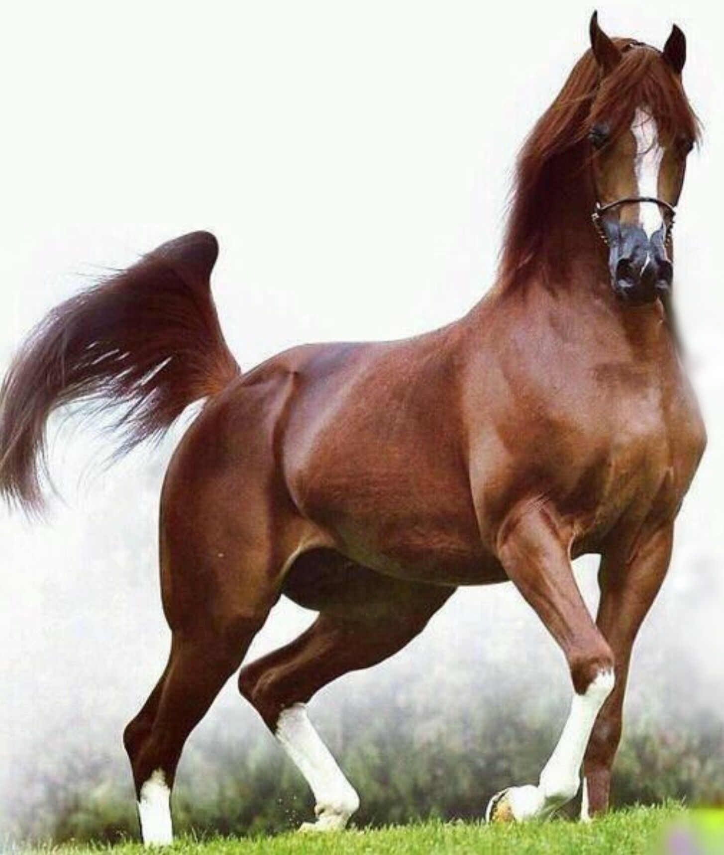 Pretty horse with silky smooth coat. | ANIMALS | Pinterest ...
