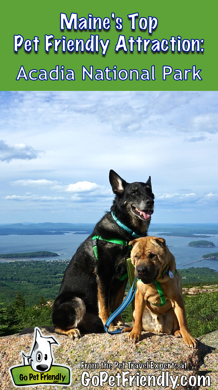 Maine's Top Pet Friendly Attraction Acadia National Park