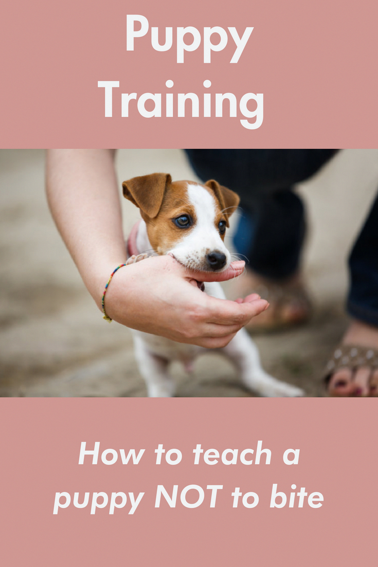 Pin On Puppy Training