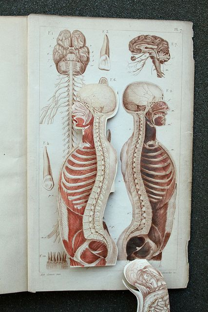 Man: His Structure and Physiology, 1857 | Flickr - Photo Sharing! from HornimanMuseum