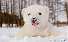 Resultado de imagem para animais fofinhos engraçados