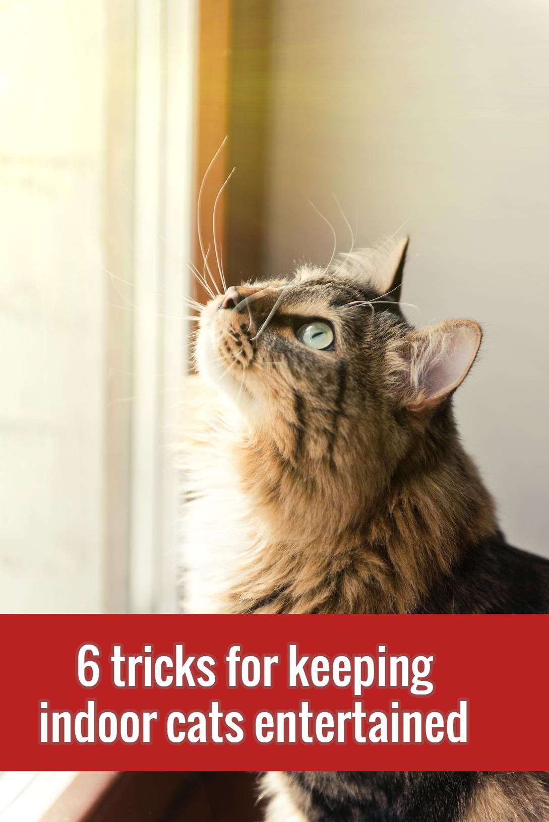 6 Ways To Keep Your Indoor Cat Safe And Happy Cats Indoor Cat Cat Care