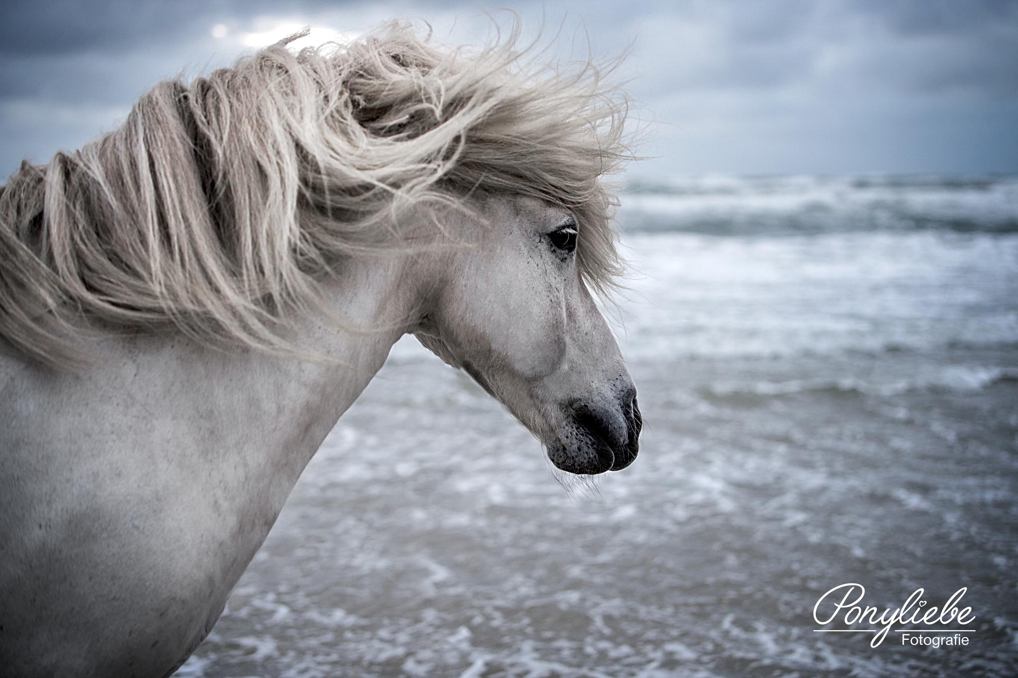 Portfolio Ponyliebe Fotografie Pferde Fotografie Pferdefotografie Camargue Pferd