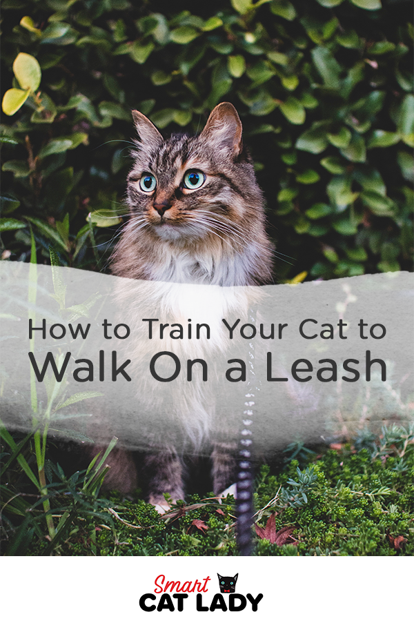 How to Train Your Cat to Walk on a Harness or Leash in