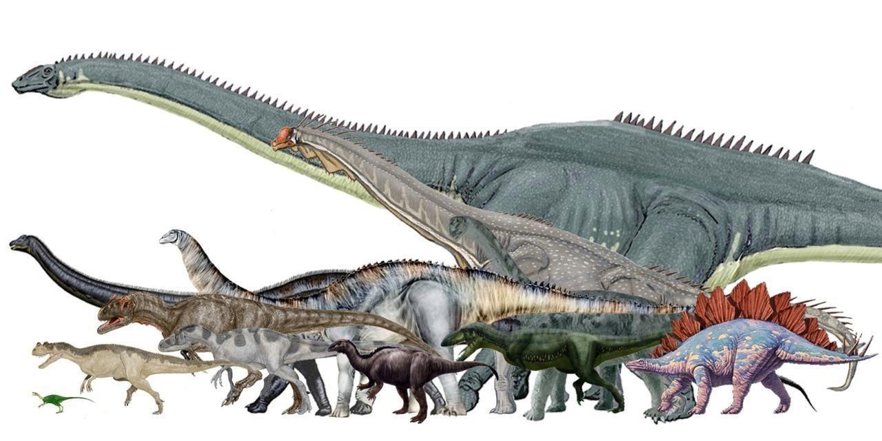 apatosaurus vs diplodocus - HD2000×1000