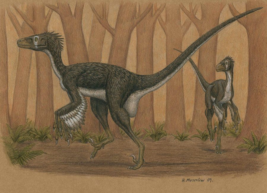 Dromaeosaurus Albertensis By Brokenmachine86 On Deviantart