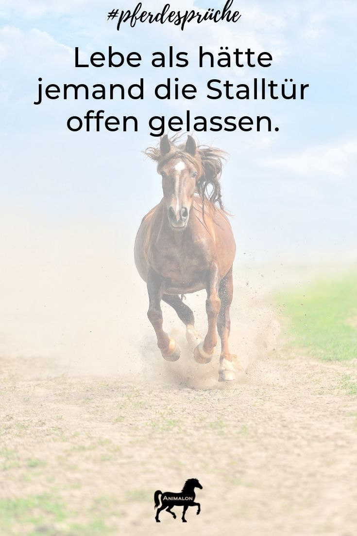 Unser Motto heute 😘🐴   Lustige pferdesprüche, Sprüche