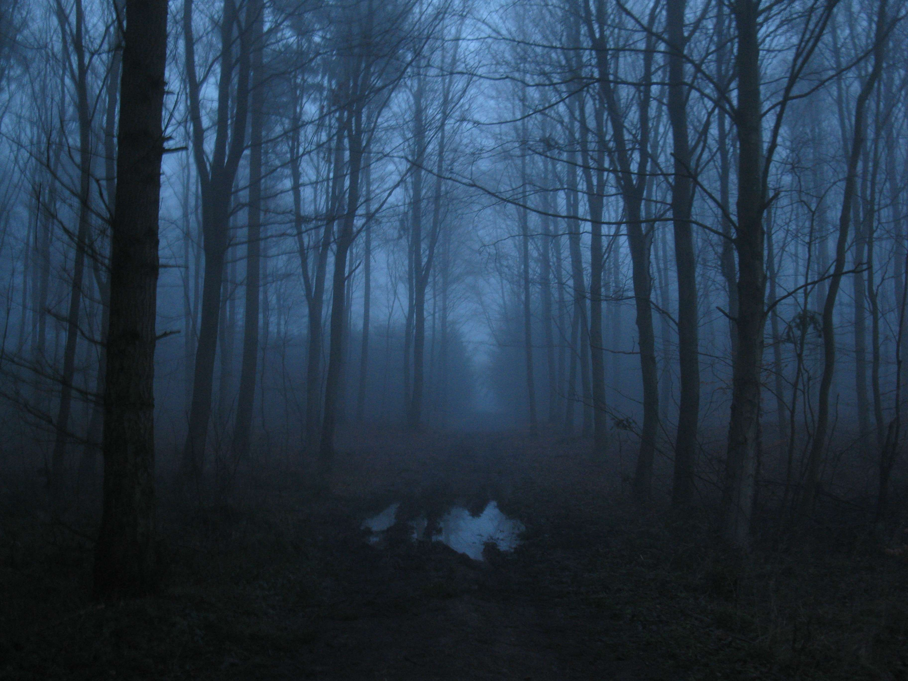 Fog Foggy Forest Forest Path Nature Scary Foggy Forest Scary Wallpaper Forest Path
