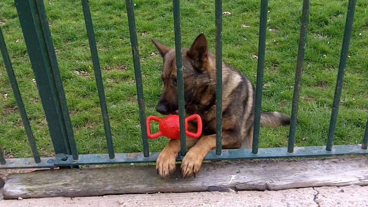 974 7737 in 2020 Dog behaviorist, Working dogs, Dog training