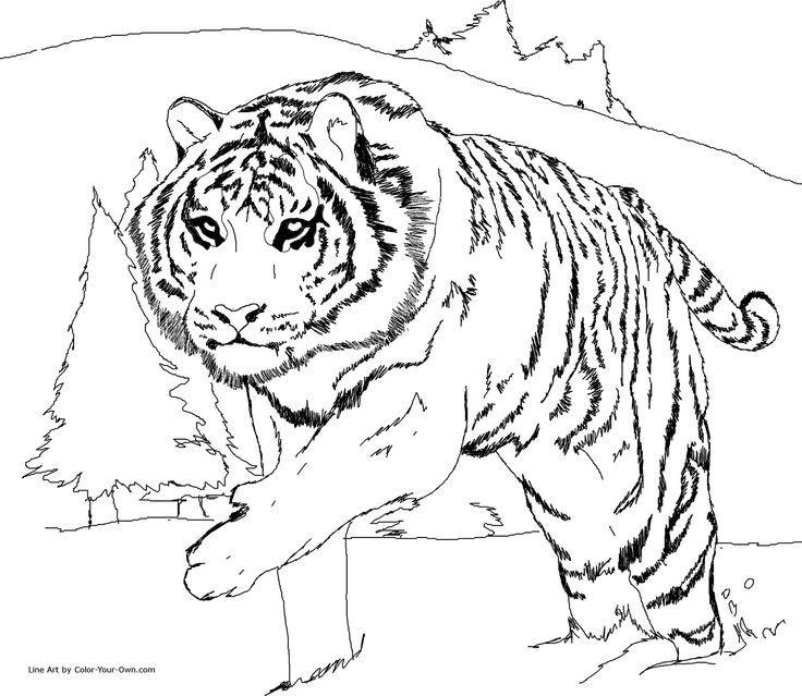 Libro Colorear Adultos Animales Salvajes Sök På Google Contorno