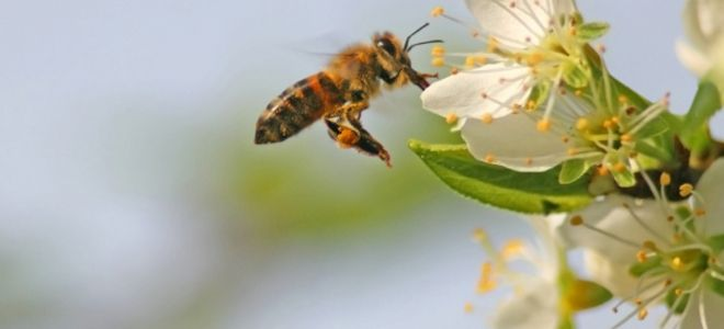 Follow these simple steps to make your own homemade bee ...