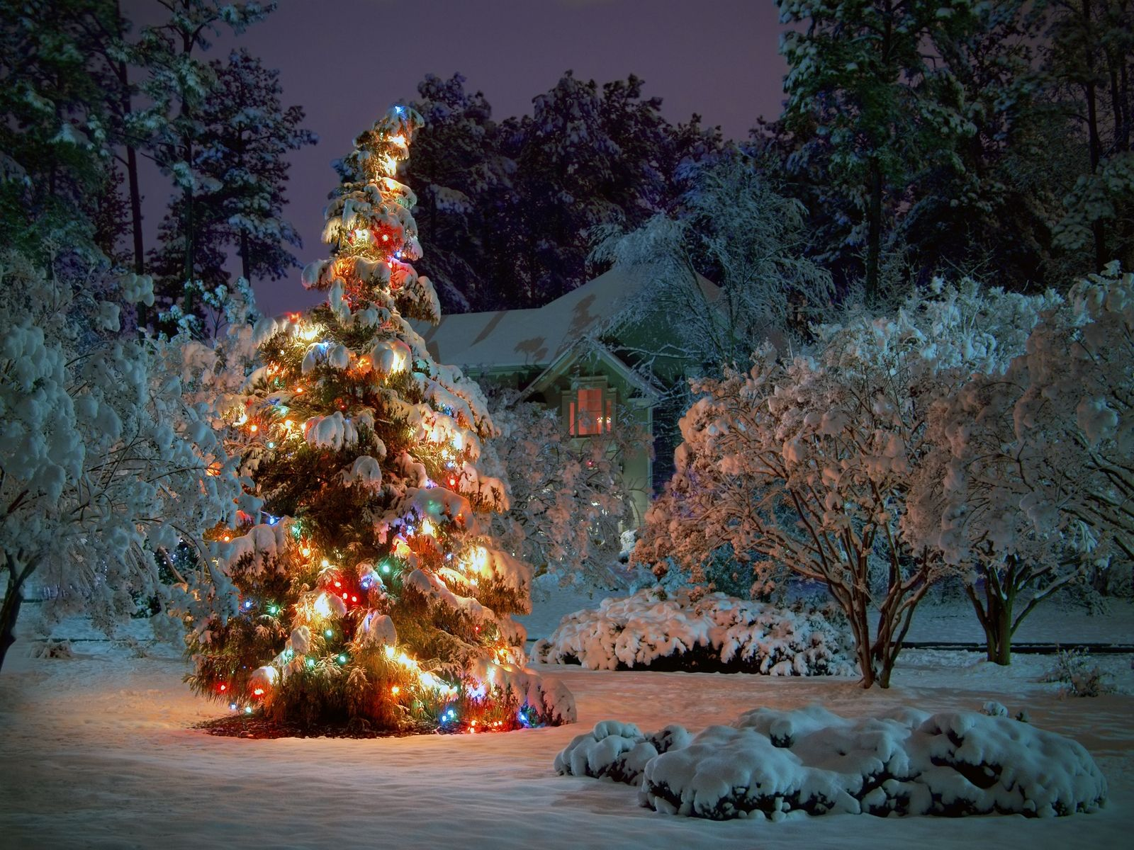 Outdoor Christmas Tree Christmas Tree Wallpaper Outdoor Christmas Tree Beautiful Christmas Trees Decorated