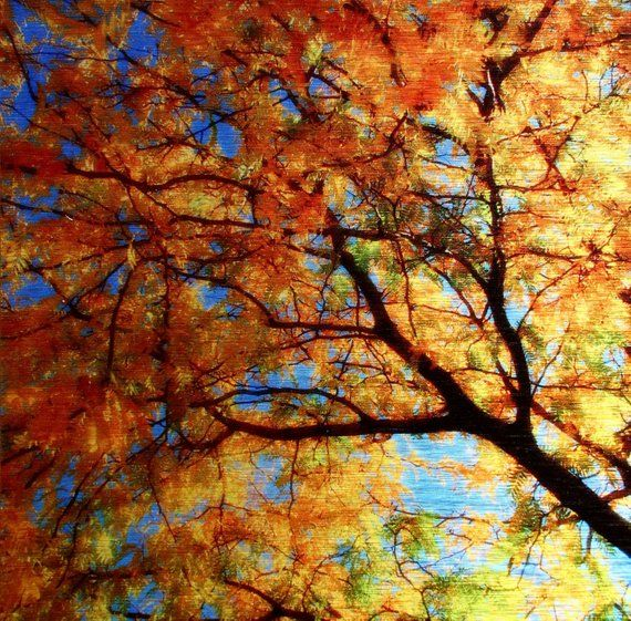Fall Maple Leaves Art Metallic Wall Decor Autumn Harvest Abstract Colorful Photography Aluminum Metal Wall Art Autumn Leaves Maple Leaf Art Leaf Art Color Photography