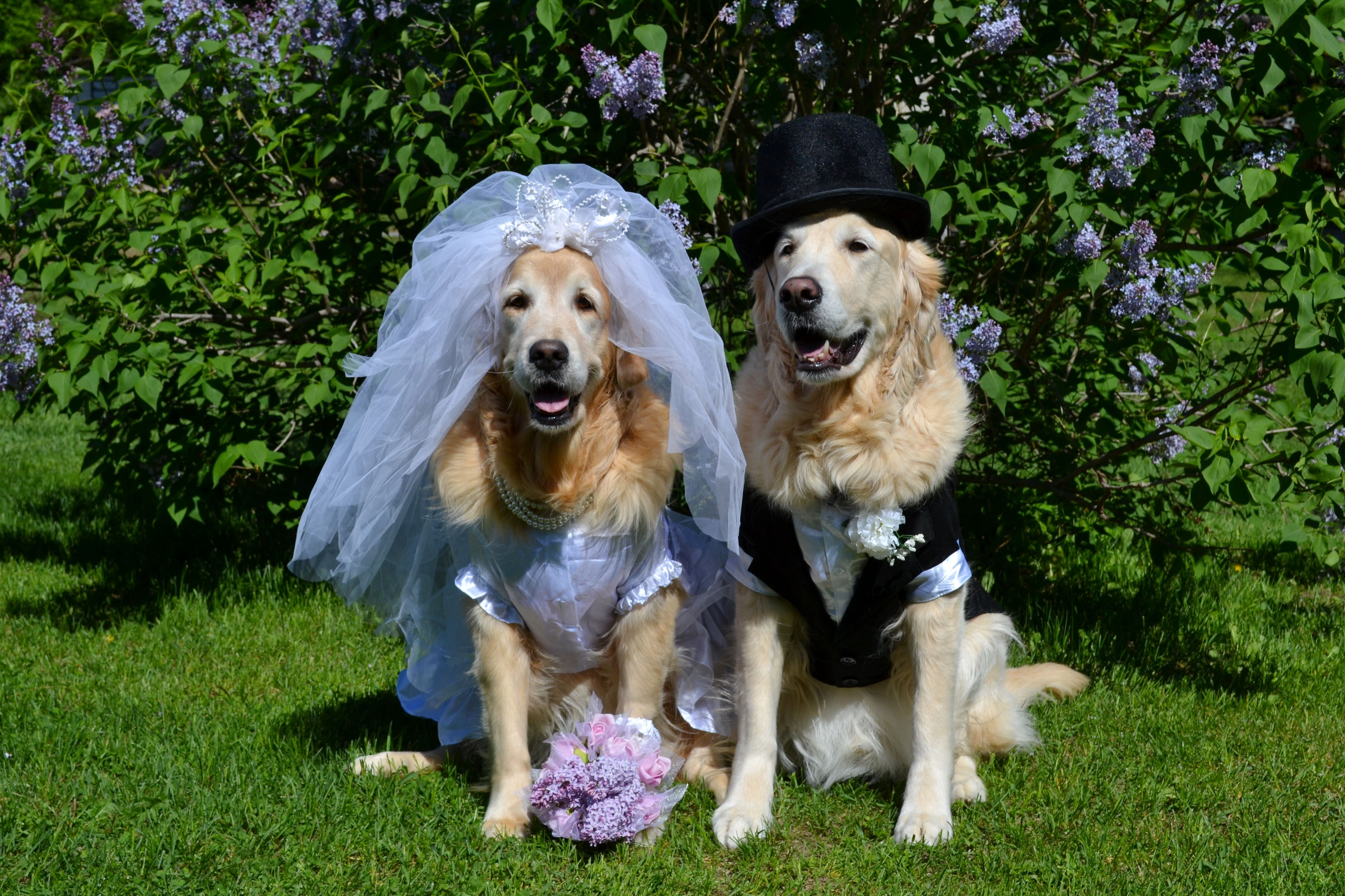 Brie and Ben also posing for a Congratulations on Your Wedding Day note card