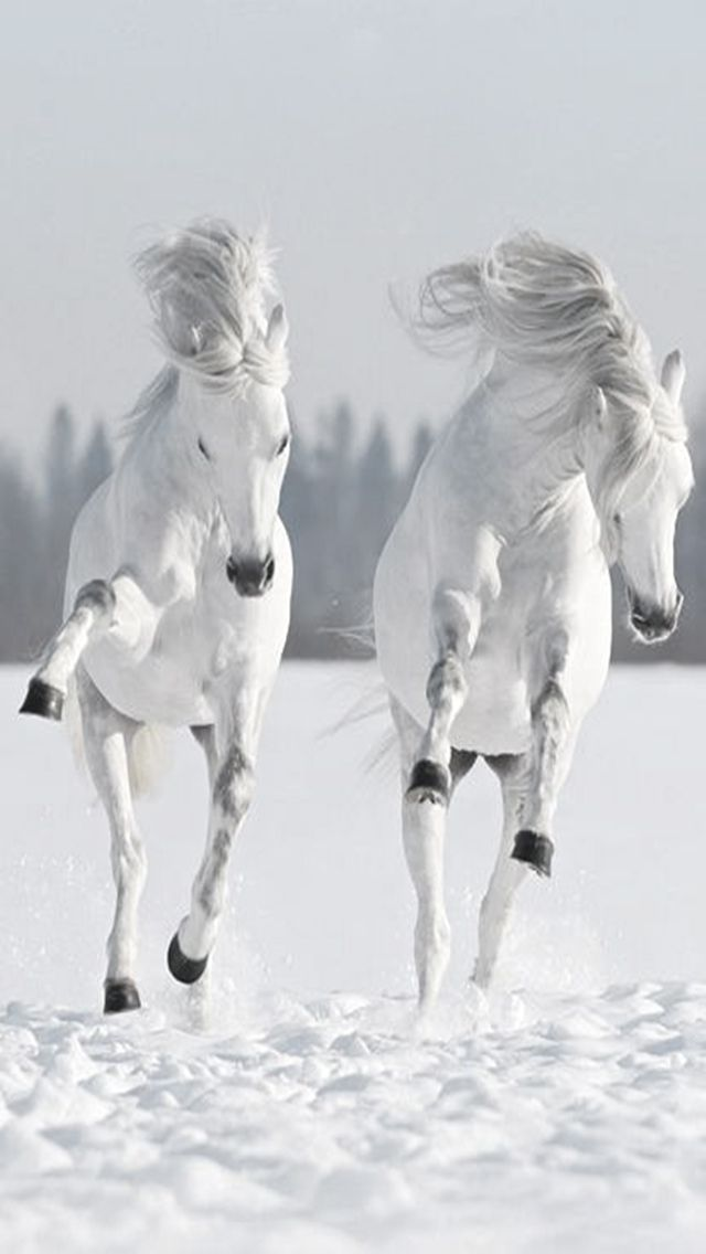 Download Snow And Horses Samsung Galaxy Y S5360 Hd Wallpapers 4371658 Snow And Horses Mobile9 Animals Beautiful Pretty Horses Horse Love