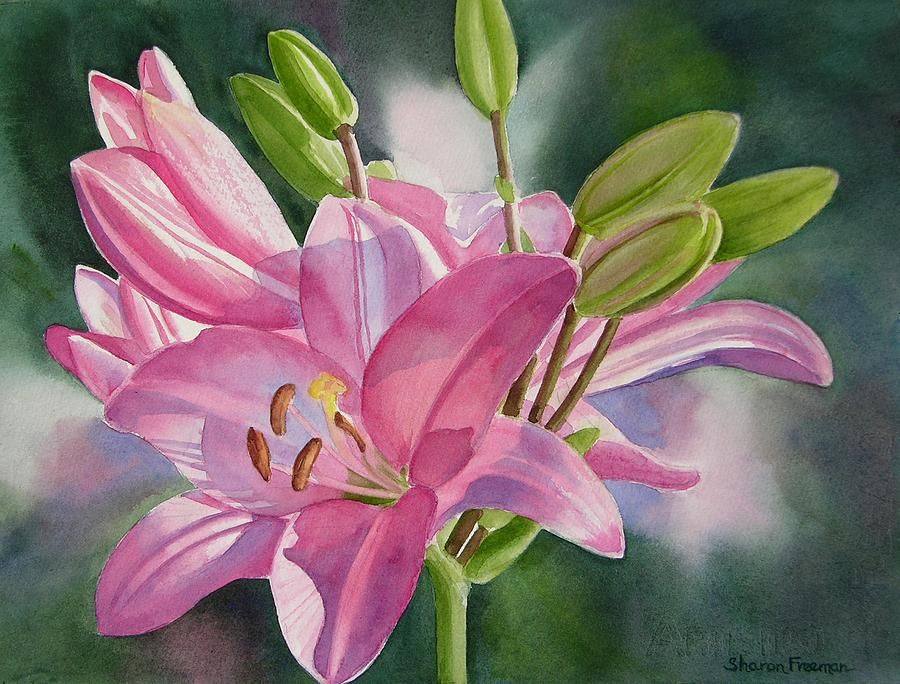 Pink Lily With Buds By Sharon Freeman Lily Painting Watercolor
