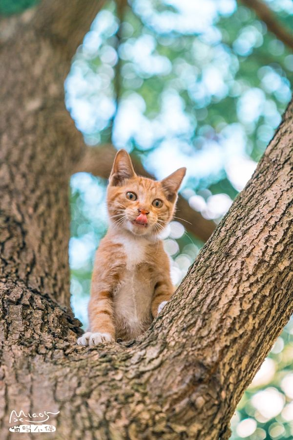 Whats good fast honor! by iMiao5 ON Cute cats