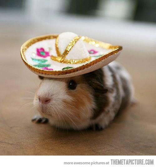 Viva Mexico ハムスター おかしな動物 可愛い 動物