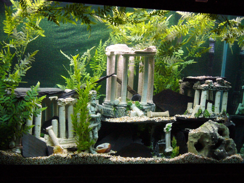 Cichlids Com Tank Examples 110gallon Atlantis Themed Hey