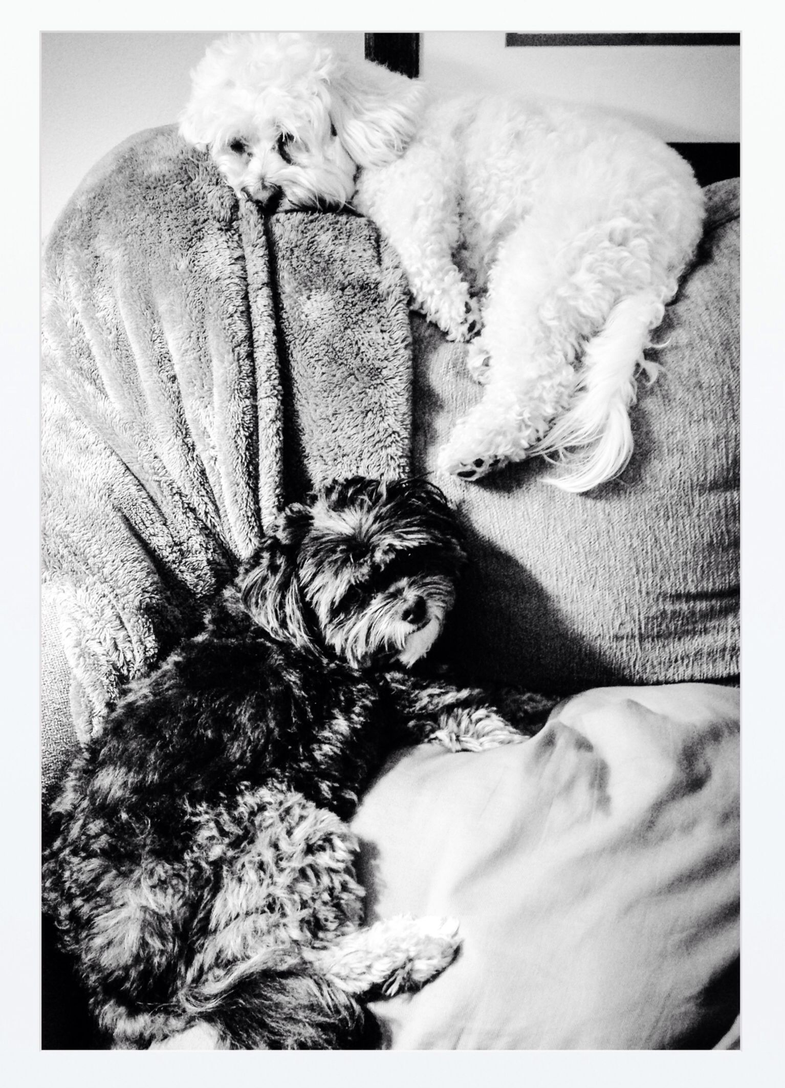 Lazy pups