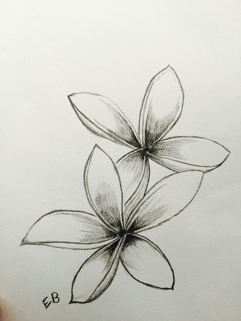 Frangipani Hawaiian Flower Drawing Flower Outline Tattoo Flower Drawing
