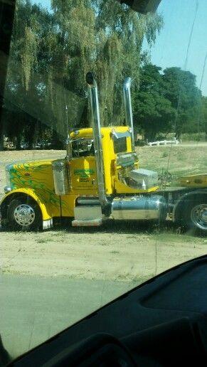 Maggini trucking 559