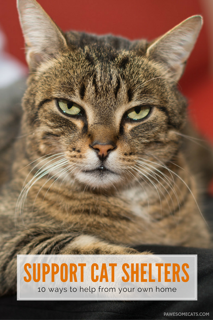 10 Ways To Help Your Local Animal Shelter From Your Own Home Pawesome Cats Animal Shelter Animals Cats
