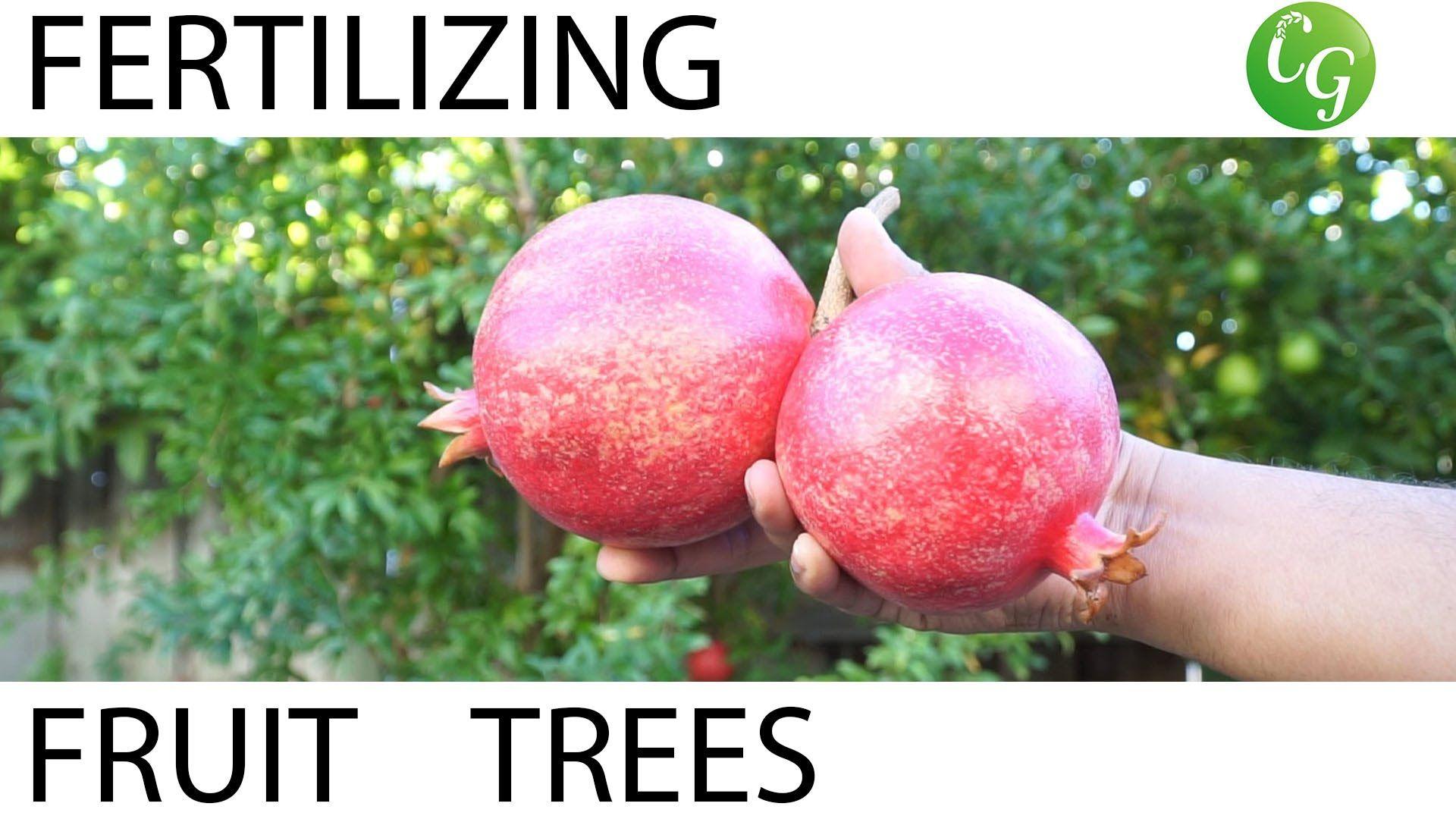How To Fertilize Fruit Trees Fertilizing Schedule Guide Fruit Trees Planting Fruit Trees Dwarf Fruit Trees