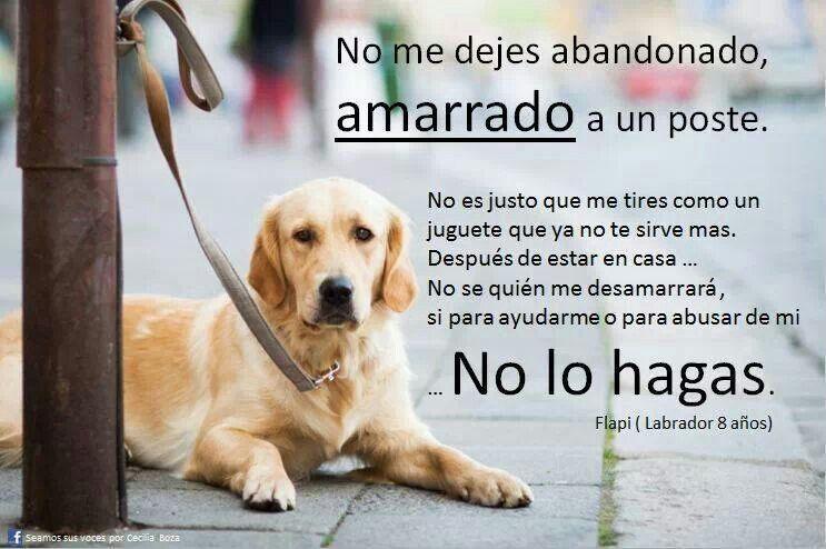 Pin De Andy Silvestri Escalante En Conciencia Animal Amantes De Perros Gatos Y Perros Lindos Perros Frases