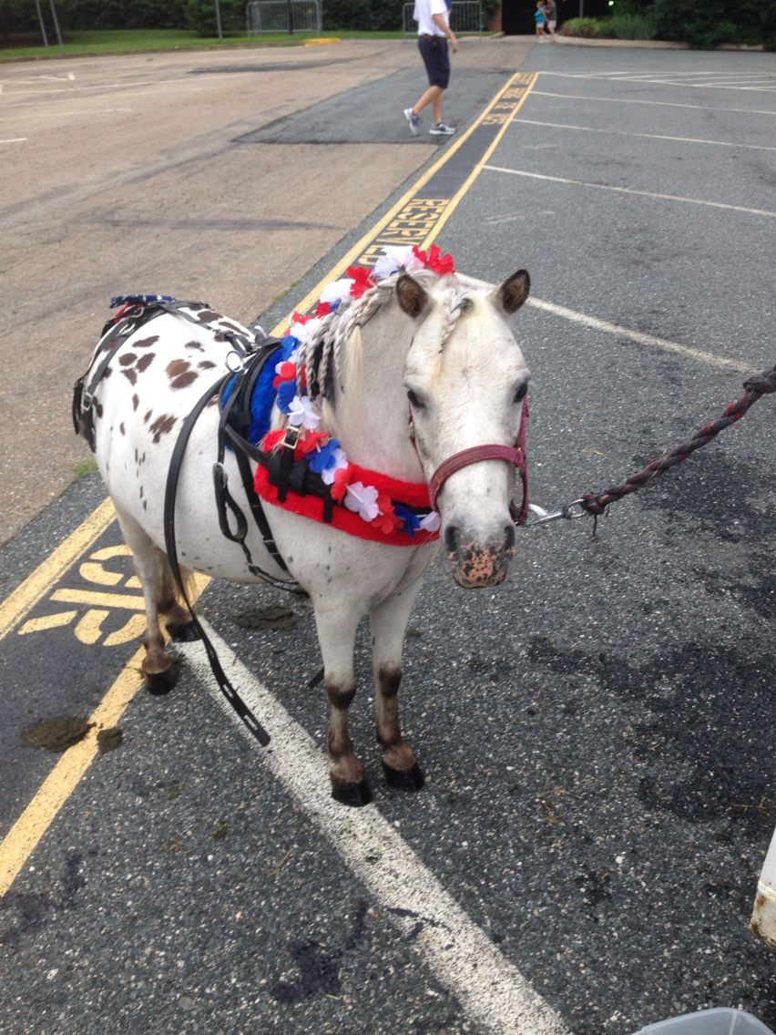 Here is our miniature horse willy