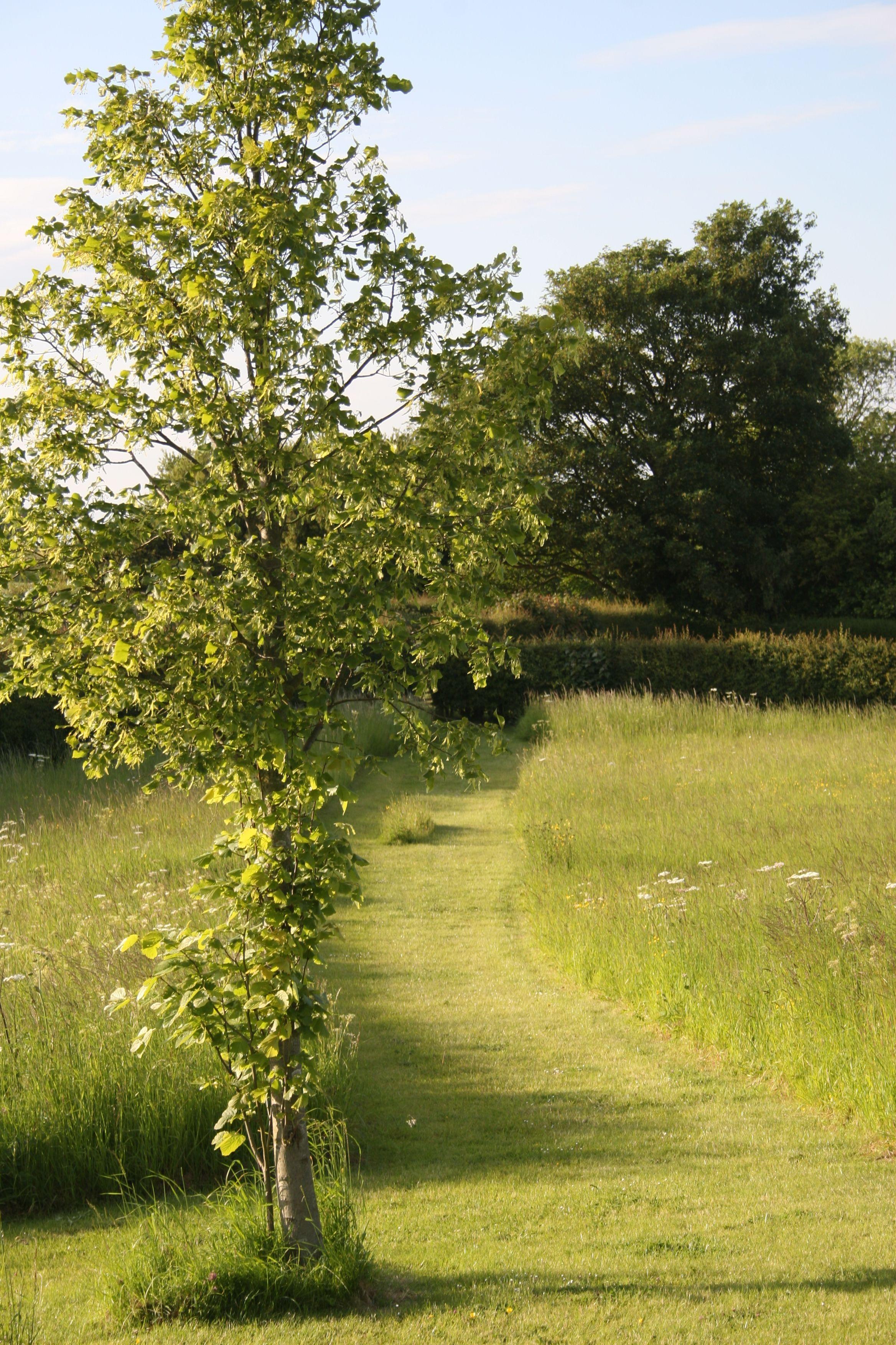 Angus Thompson Design: Meadow walk   COUNTRY GARDENS   Pinterest ...