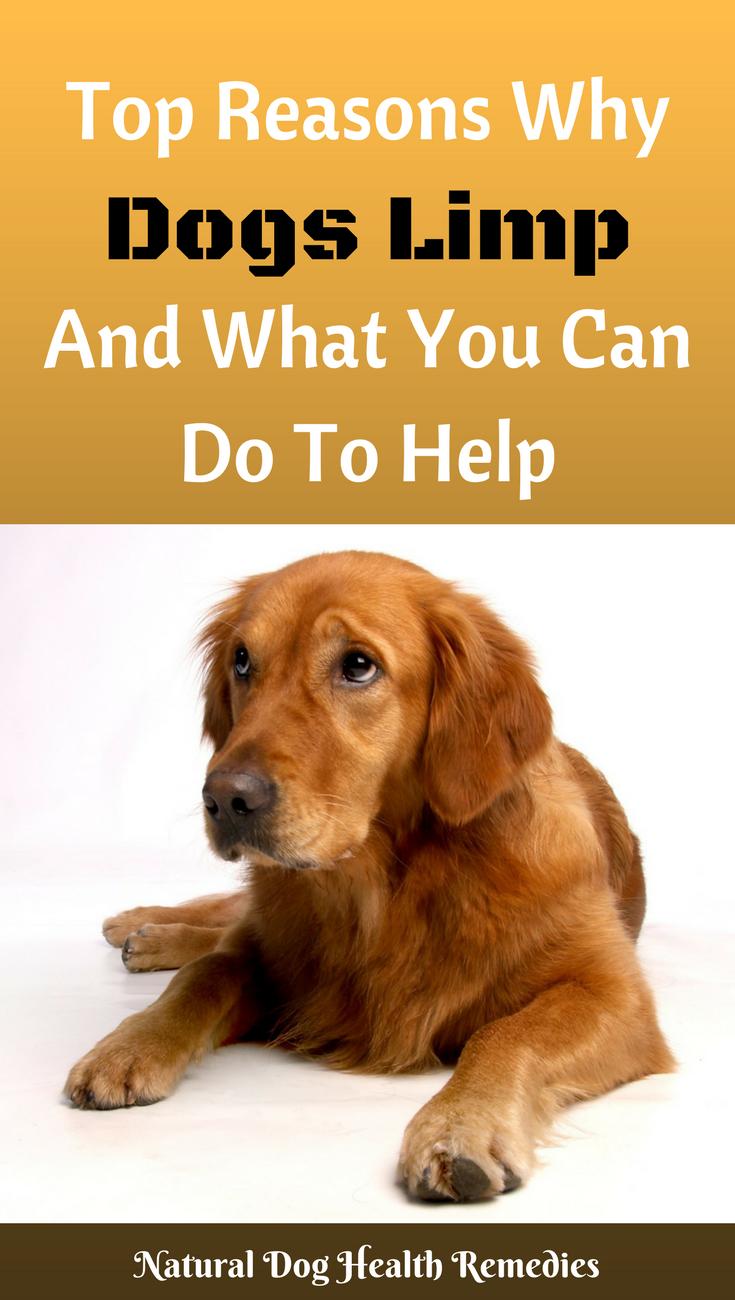 Dog Lameness Dog illnesses, Dogs, Limping dog
