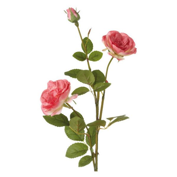 OKA Artificial English Garden Rose Stem - Pink (40 BRL) ❤ liked on Polyvore featuring home, home decor, floral decor, flowers, plants, backgrounds, fillers, decoration, effect and fake flowers
