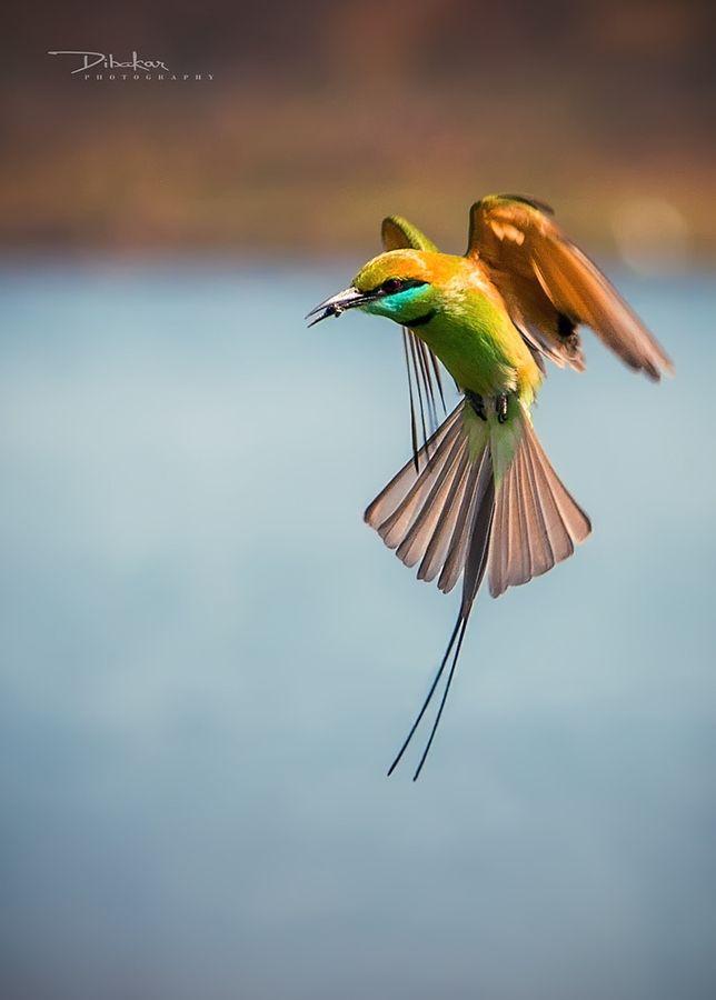 in fly.jpg by Dibakar Bala - Photo 146281235 - 500px