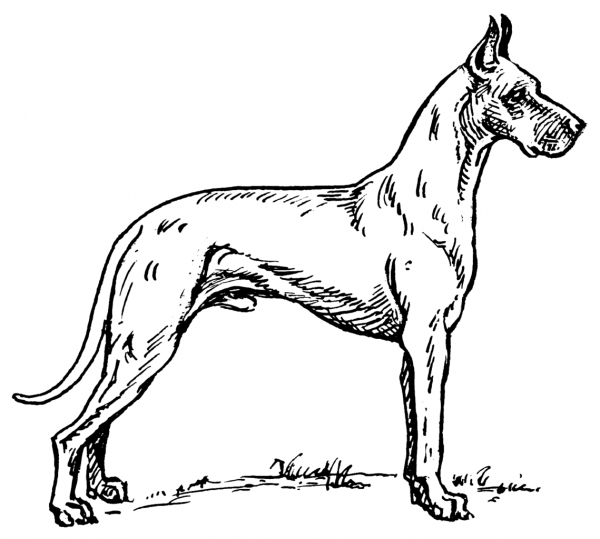 Great Dane Coloring Pages XPlYB   Coloring pages for Adults ...