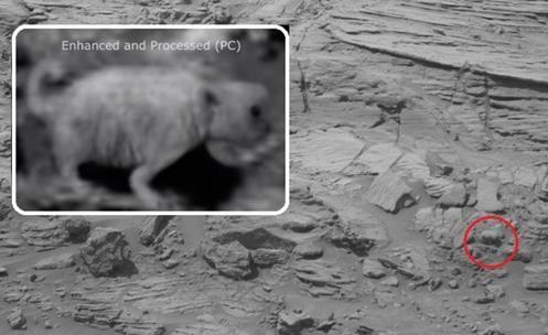Resultado de imagem para Mars Rover da NASA avista urso pardo morto no planeta vermelho