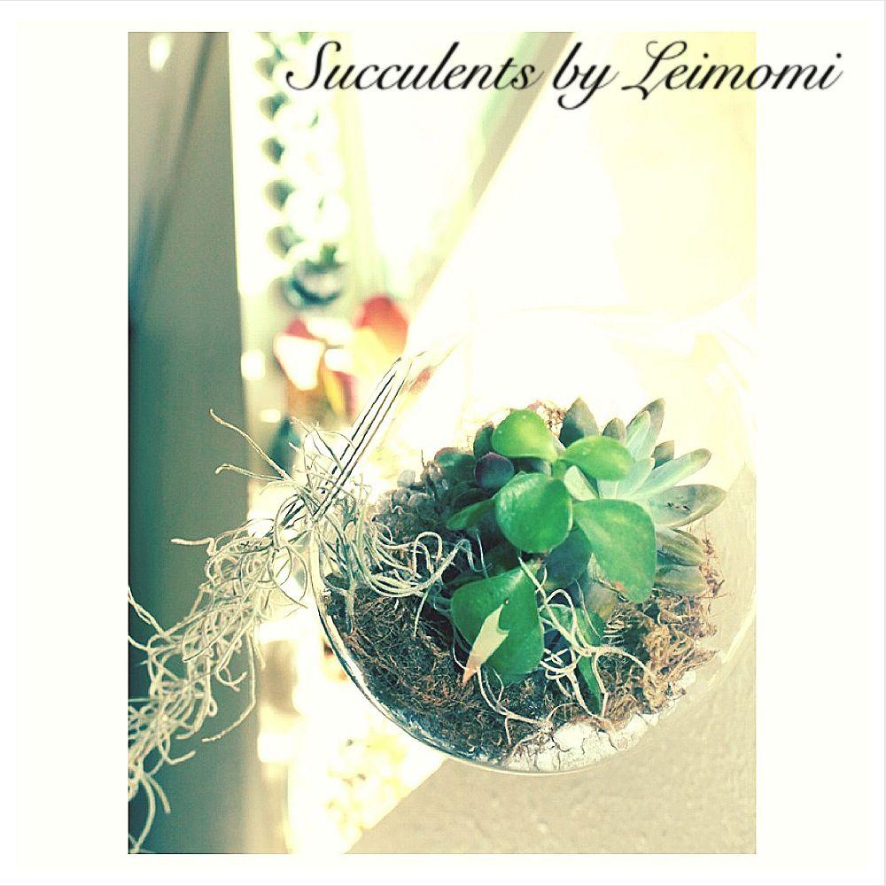 Succulents, Plants, Decor