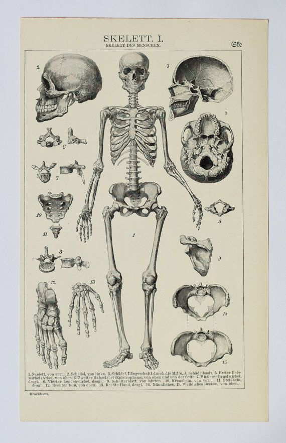 1903 Skeletons, an original antique print from 1903, a lithography ...