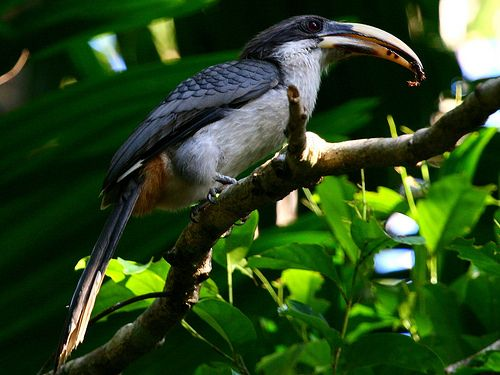 Holidays In Sri Lanka With Secret Lanka Maldives Destinations Pet Birds Visit Maldives
