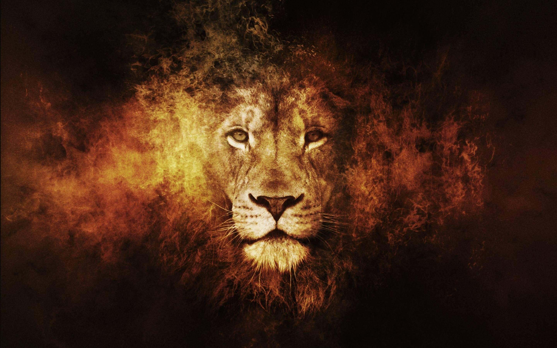 Best Lion Pictures Wallpaper