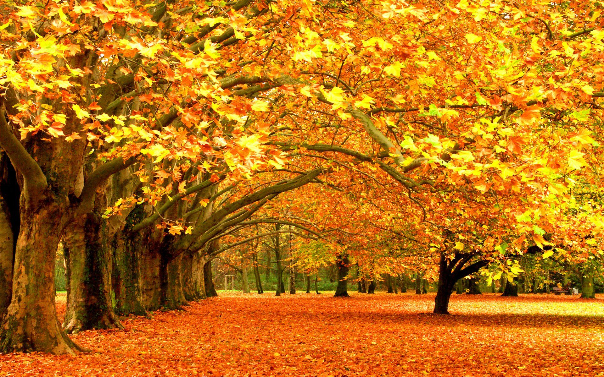 Fall Autumn Foliage Trees Wallpapers 1920x1200 2461500 Autumn Trees Landscape Scenery