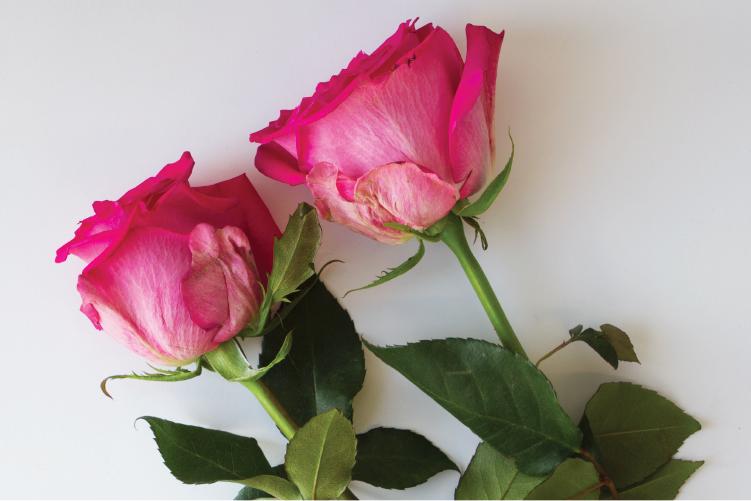 DIY Rose Water Toner for Calming and Soothing Skin