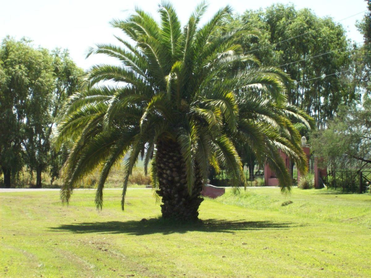 Palmeras no son rboles jos saramago en el a o de la for Jardines con palmeras
